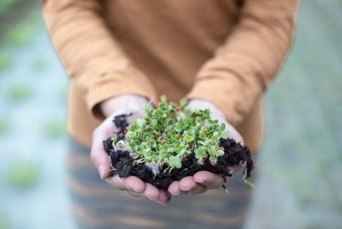fotografia corportaiva alimentacion ecosostenible
